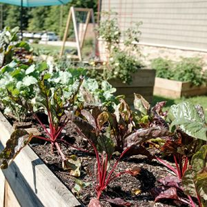 Time-Saving Tips for Vegetable Gardeners