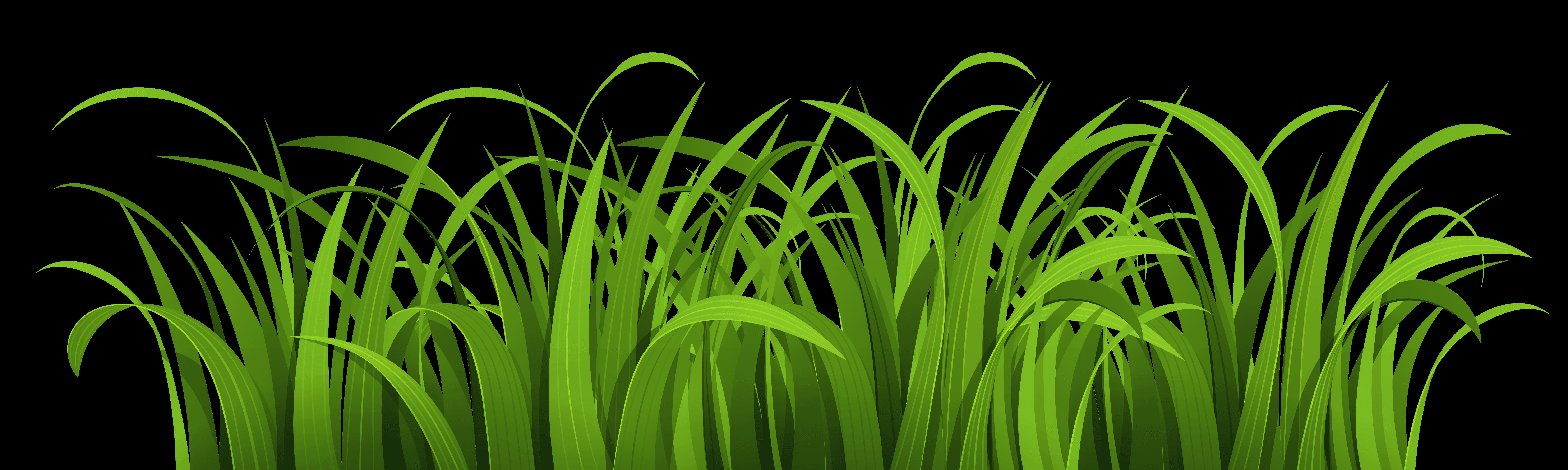 pngpix com grass vector png transparent image supernatural brand supernatural brand